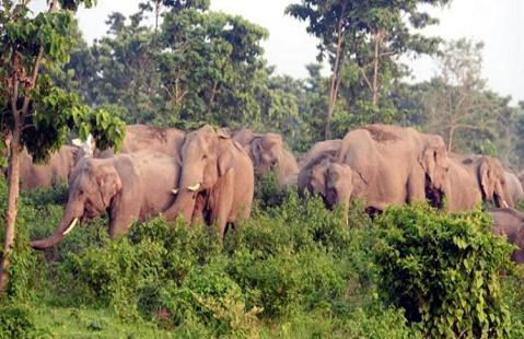 বান্দরবানে বন্য হাতির আক্রমণে কৃষাণীর মৃত্যু