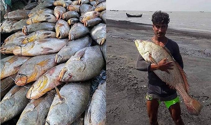 এক জালেই উঠল ৪০ লাখ টাকার মাছ