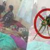 সরকারি হাসপাতালে বিনামূল্যে ডেঙ্গু পরীক্ষার সিদ্ধান্ত