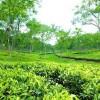 মৌলভীবাজারে চা বাগানে পাঁচজনকে কুপিয়ে হত্যা