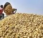এবার আলুর কেজি ৩৫ টাকা নির্ধারণ করল সরকার