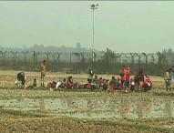 ভারত আরও ৩১ রোহিঙ্গাকে বাংলাদেশে পাঠাতে চায়