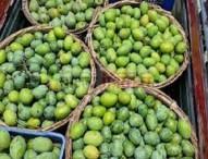 রাজশাহীতে আম পাড়ার সময় বেঁধে দিল প্রশাসন