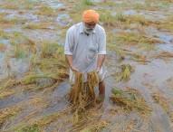 মহারাষ্ট্রে তিন বছরে ১২ হাজার কৃষকের আত্মহত্যা