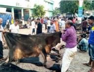 কোরবানির পশুর চামড়ার দাম 'বিপর্যয়'