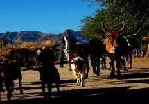মাদাগাস্কারে গরু চুরি নিয়ে সংঘর্ষে ৪৬ জন নিহত